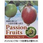 お得な2個セット!!夏は涼しく秋は美味しく!!パッションフルーツ