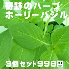 奇跡のハーブホーリーバジルトゥルシー3個セット(空気浄化・マイナスイオン・新陳代謝)