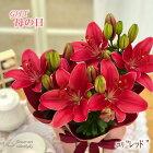 母の日ギフトユリレッド母の日ギフト贈り物プレゼントゆり百合5号鉢送料無料花鉢植え