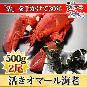 【500g×2尾】プリップリのオマール海老の2尾セット!パーティ・BBQ・ギフトにどうぞ!オマール...