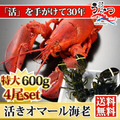天然 活オマール海老(★特大600g)4尾入