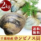 活きホンビノス貝・白はまぐり(サイズ無選別)2kg入ギフトにも最適!送料無料!