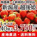 新潟が誇るブランドいちご『越後姫』を、「土耕栽培」「無農薬」で育てました!果肉の柔らかい...