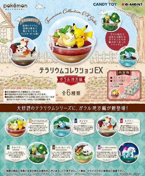 コレクション, 食玩・おまけ  EX 6BOX 20201019