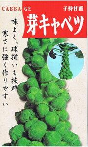 子持甘藍 芽キャベツ 【春】【秋】