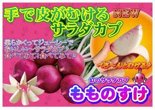 ナント種苗サラダカブもものすけ1ml