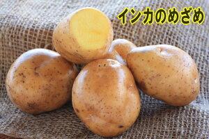 【ジャガイモ】インカのめざめ500g位入