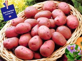 【種ジャガイモ・種いも】フレンチポテト「レッドカリスマ」の種じゃがいも約500g入