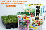【感謝フェア開催中!】【送料込】<新品種>クラピアk7(白花) 9cmポット苗 24本セット(有機肥料・有機石灰付き)