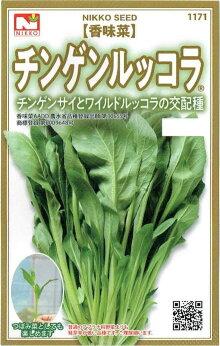 日光種苗香味菜「チンゲンルッコラ」のタネ1ml【品種登録出願中】