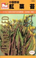 紅菜苔(こうさいたい、コウサイタイ) 【秋】 【郵送対応】