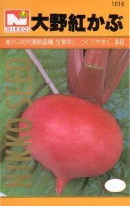 大野紅カブ(かぶ) 【秋】