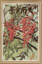 盆栽の種 赤実南天【1月上旬頃より出荷】