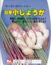 【国産】白芽小しょうが 約1kg入【たねいも用】 〜3月下旬頃から出荷予定〜