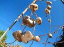 「宇宙いもたねムカゴ 10球入」【販売期間:秋期10月中旬〜11月30日/春期3月25日〜4月30日】