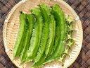 琉球野菜苗「琉球四角豆」【2本セット】 ~5月上旬頃発送分予約~