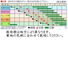 渡辺採種場トマトMr.浅野のけっさく約100粒【郵送対応】