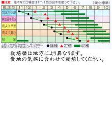 渡辺採種場トマトCFプチぷよコート種子約11粒【郵送対応】
