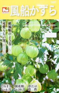 風船かずら(フウセンカズラ)1.2ml(約10粒)【春】【郵送対応】