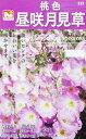 日光種苗 桃色昼咲月見草 0.2ml【523】【春・秋】【郵送対応】
