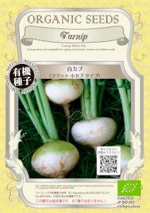 【有機種子】 白カブ 1.8g【郵送対応】