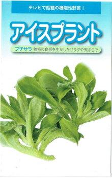 アイスプラントプチサラコート種子70粒入