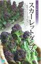 丸種 一代交配 茎ブロッコリー スカーレットダンス 約30粒 【郵送対応】