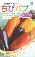 丸種カラーピーマンちびパプパープル約5粒【郵送対応】