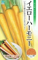 丸種イエローハーモニーネオコート種子約340粒(にんじん・ニンジン)【郵送対応】
