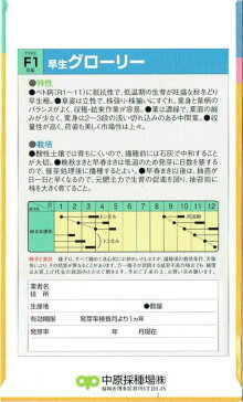 中原採種場ホウレンソウ早生グローリー25ml【郵送対応】
