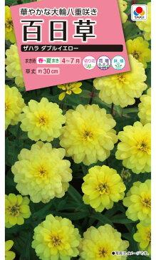 タキイ種苗 百日草 ザハラダブルイエロー 約20粒【郵送対応】