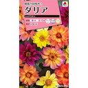 タキイ種苗 ダリア レッドスキン 約40粒【郵送対応】