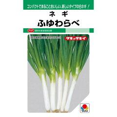 タキイ種苗 ネギ ふゆわらべ 8ml【郵送対応】