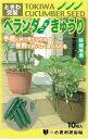 ときわ研究場 鉢栽培用ベランダきゅうり 約10粒【郵送対応】