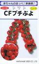渡辺採種場 トマト CFプチぷよ コート種子約11粒 【郵送対応】