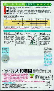 天理交配食用ホオズキキャンディーランタン約14粒入【郵送対応】