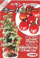 天理交配 ホームルビートマト 約10粒