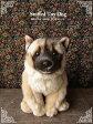 【秋田犬 座り ver.】リアルで可愛い犬のぬいぐるみ【N-MM-D】【犬のぬいぐるみ】