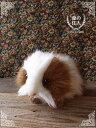 ネズミ ぬいぐるみ リアル HANSA《モルモット(天竺鼠)》【N-CN-M】【ねずみのぬいぐるみ】【小動物のぬいぐるみ】無料ラッピング 誕生日 クリスマス プレゼント