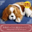新商品《5月中旬から販売予定です。》【本物そっくりに眠るキャバリア(大)のぬいぐるみ】パーフェクトペット|犬のぬいぐるみ|動くぬいぐるみクリスマス|誕生日|プレゼント|ギフト|お見舞い【N-UC-D】