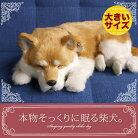 新商品《5月中旬から販売予定です。》【本物そっくりに眠る柴犬(大)のぬいぐるみ】パーフェクトペット|犬のぬいぐるみ|動くぬいぐるみクリスマス|誕生日|プレゼント|ギフト|お見舞い【N-UC-D】