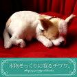 【本物そっくりに眠るチワワ(スムース)のぬいぐるみ】パーフェクトペット|犬のぬいぐるみ|動くぬいぐるみ|誕生日|クリスマス|プレゼント|ギフト|お見舞い|ペットロス