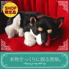 猫ぬいぐるみ動くぬいぐるみリアル