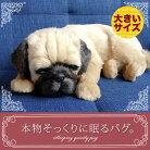 新商品《5月中旬から販売予定です。》【本物そっくりに眠るパグ(大)のぬいぐるみ】パーフェクトペット|犬のぬいぐるみ|動くぬいぐるみクリスマス|誕生日|プレゼント|ギフト|お見舞い【N-UC-D】