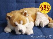 新商品《6月上旬販売予定》【本物そっくりに眠る柴犬(大)のぬいぐるみ】パーフェクトペット|犬のぬいぐるみ|動くぬいぐるみクリスマス|誕生日|プレゼント|ギフト|お見舞い