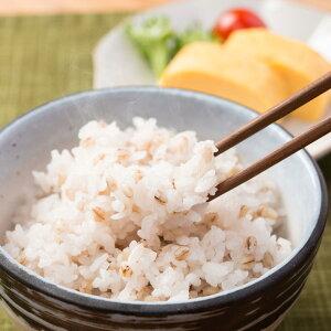 もち麦 讃岐もち麦 ダイシモチ 2kg 国産 大容量 小分け 香川県産 もちむぎ まんでがん 無添加 紫もち麦