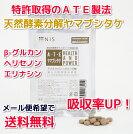 天然酵素分解ヤマブシタケ