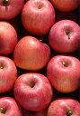旬のフルーツを産地から直送します福島県産 サンふじりんご 約5kg (18玉)