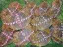 【お得なオスメス食べ比べ10匹セット(梅)】上海蟹 オス 公 小5匹@130g前後 メス 母 中5匹@90g前後 特上 ギフトにオススメ 蟹 贈答品 オーダー頂いてから急速冷凍