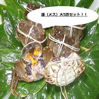 【本場中国産】上海蟹 メス 母 特売! 大5匹セット @110g前後 贈答 ギフトにオススメ 蟹 オーダー頂いてから急速冷凍
